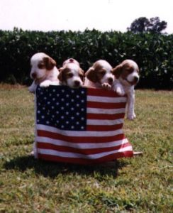 Twin Cedars Kennel – Puppies Now Available!
